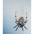 nature jaro spider wildlife wild close zoom macro