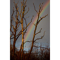 shapwick heath rainbow