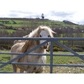 pony hippy dreadlocks wales