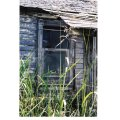 window house home glass wood grass curious mystery