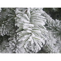 white winter green bulgaria frost snow nature
