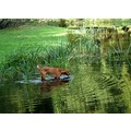 netherlands groeneveld autumn dog water nethx groex waten dogx