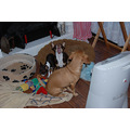 animals dogs pets binky sissy dixie