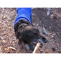 kelly dog stick play