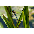 Dragonfly please enlarge