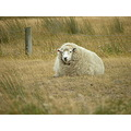 sheep wool wind warm dunedin weesue