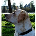 netherlands nederhorst animal dog nethx nedex animx dogx
