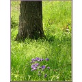 tree nature flowers France grass meadow field spring may