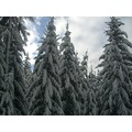 Snow White Ski Skiing snowing trees ice france valley