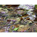 watercolors skoenlaper nature water stream
