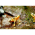Animal Nature Frog Amphibian
