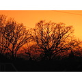 sunset colour orange tree sky nature