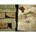 butterfly summer garden wood stones