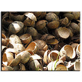 Wasted...Abandoned... ( coconut husks piled for burning... )