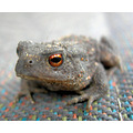 it's Dave the toad. isn't he cute?