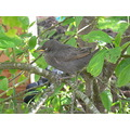 quiet!   i think he's asleep.?      this was a poor little baby bird that i found lost in the mid...