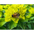 nature flower bee pollen