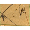Minimalism...