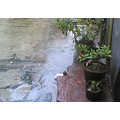 Plants Rain Monsoon in Delhi India