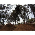 Carol @ the dirt jumps.