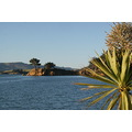Otago Harbour Yellow Head