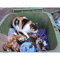 a cat in a bin essauira morocco