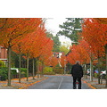 autumn colours trees street winschoten perspective