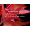 Bible Scriptures Christian Religious Spiritual Nature Autumn Fall Shae