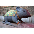 zespook lucknow india rat