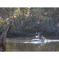 canoe pelican river disturbance perth littleollie