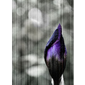 photoshopped flower purple