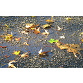 autumn leaf concrete road