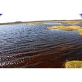 Lake in the peatbog.