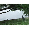regents park london heron