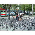 Pigeons gathering at a park in Bangkok Thailand