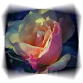 rose multicolor light