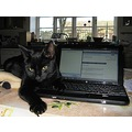 black cat computer laptop PC