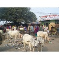 Nepal Fixit Roadtrip Janakpur Cattle Rubbish Mess