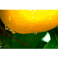 Shining aluminium water drops Grapefruit garden littleollie