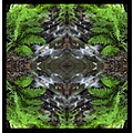 nature water fern mirror mandala