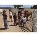 lots of kids visting the horse today