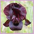 Another one for my friend who loves the violet Iris...