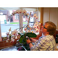 My orchids are taking over - I have 9 of them now. This one is the biggest - I must have had it f...