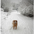A neighbour's dog yesterday in the snow