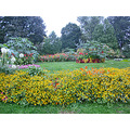 albanyfph albany newyork albanyny park garden yellow green trees flowers