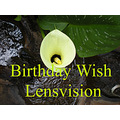 Birthday Wishes Lensvision