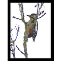 nature bird woodpecker feathers carlsbirdclub