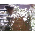 One for moniqpl.   This morning, woke up to snow. I thought we were going to miss winter all tog...
