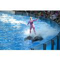 seaworld orlando florida show entertainer dolphins people