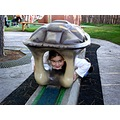 That she feels to be a turtle it feels Zoe in this square of the senses